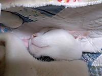 20130111_cat3