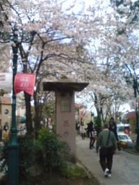 20140329_sakura