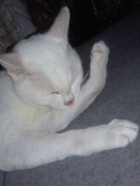 20150526_cat