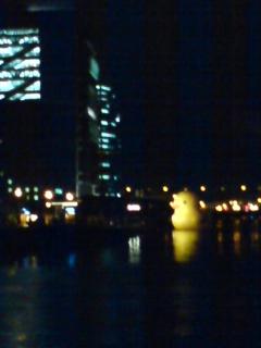 20101213_duck