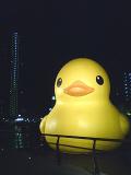 20101215_duck3
